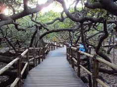 Image result for passarelas em madeira