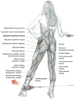 The Anatomy of The Upright Row Workout. The upright row is a weight training exercise performed by holding a grips with the overhand grip and lifting it str Bodybuilding, Gluteal Muscles, Latissimus Dorsi, Nutrition Sportive, Muscle Anatomy, Butt Workout, Workout Fitness, Weight Training, Fitness Routines