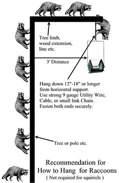 How To Keep Raccoons Off Your Bird Feeder Pole 7 Steps