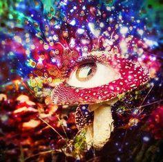Mushroom Art, Mushroom Fungi, Art Pictures, Art Images, Art Pics, Trippy Mushrooms, Psy Art, Lol, Visionary Art