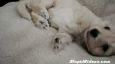 Puppy Wakes Up | Watch the video - Yahoo! Screen