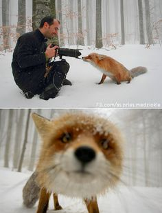 fox, so cute!