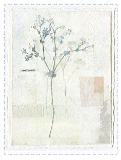katebuchanan | Gallery