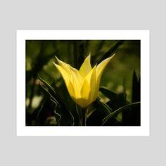 #INPRNT #fine art #print #poster #art Yellow Tulips, Print Poster, Fine Art, Art Prints, Printed, Gallery, Paper, Floral, Flowers