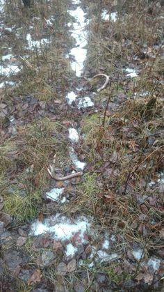 Shed Antlers, Elk, Sheds, Horns, Hunting, Facts, Moose, Shed Houses, Horn