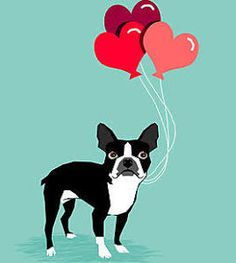 boston terrier balloon - Google Search