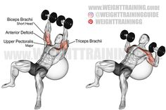 Exercise name: Incline dumbbell press on a stability ball. Target muscle: Upper Pectoralis Major. Synergists: Anterior Deltoid, Triceps Brachii. Dynamic stabilizer: Biceps Brachii (short head only). Mechanics: Compound. Force: Push. Chest Workouts, Chest Exercises, Body Exercises, Stability Ball Exercises, Best Abs, Core Muscles, Weight Training, Biceps
