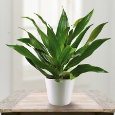 Best Houseplants for Bedrooms – Page 3 – Tea Time Flip