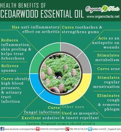 Health benefits of Cedarwood Essential Oil | Organic Facts: Health benefits can be attributed to its properties as an antiseborrhoeic, antiseptic, antispasmodic, tonic, astringent, diuretic, emenagogue, expectorant, insecticidal, sedative and fungicidal substance.