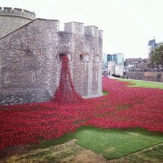 Poppies at the Tower of London.