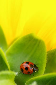 Ladybug - love the spot at the top that kind of looks like an upside down heart.
