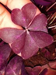 Resultado de imagen para hojas
