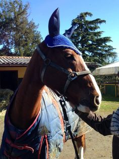 Valentina ha ricevuto il suo regalo e dai messaggi ci sembra davvero entusiasta. Valentina aspettiamo le foto del tuo cavallo con la sua nuova cuffietta!!! E nell'attesa ecco il nostro Silver che si è prestato da modello durante la realizzazione... #flyveil #flybonnet #horse #pony #cuffiettecavallo #cavallo #equestrian #equestrianstyle #equinestyle #horsewear #earbonnet #earnet #horsefashion #horselover #jumper #SilverChat #cuore #heart
