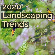 Ready to get trendy? Here are the landscaping trends that are going to be popular in 2020 that go beyond just having a beautiful yard. Get ready to save money and be eco-friendly in your upgraded outdoor space: