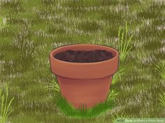 How to Plant a Plum Seed (with Pictures) - wikiHow Plum Seed, Stone Fruit, Types Of Stones, Planting Seeds, In The Flesh, Compost, Harvest, Roots, Planter Pots