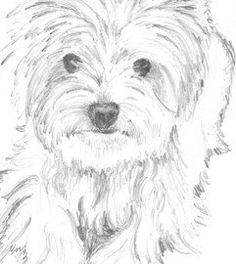 Casey print of pencil drawing Westie 8x10 by baybeari on Etsy
