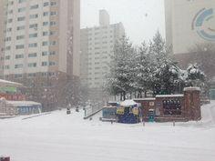 눈이야!! 눈이 나타났다!!