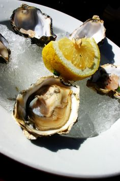 Knysna Oysters Knysna, Lush Garden, Oysters, Beautiful Gardens, South Africa, Cape, African, Spaces, Dining