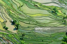 Stockfoto : Rice Paddy Fields in Southern China