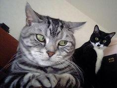 Paranoid cat lol