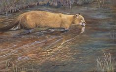 Adam Smith Wildlife Art | Private Collections/Special Friends - Debra Otterstein Wildlife Artist