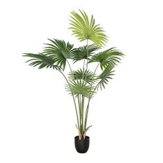 This Californian palm tree of 5' height will be an ideal artificial plant to decorate any space. This exotic artificial tree is very realistic and will seduce you with its high quality finish. California Palm Trees, Artificial Tree, Green Plants, Decoration, Houseplants, Exotic, Space, Amp, Products
