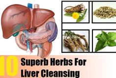 10 Superb Herbs For Liver Cleansing