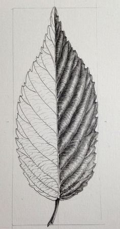 Botanical Art Online with Dianne Sutherland, botanical art courses Realistic Pencil Drawings, Graphite Drawings, Pencil Art Drawings, Drawing Sketches, Drawing Ideas, Sketching, Leaf Drawing, Nature Drawing, Illustration Courses