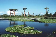 Madagascar :)