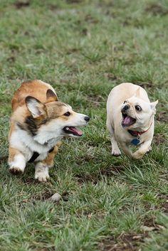 Doggies, doggies, everywhere!