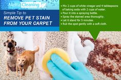 Simple Tip to Remove Pet Stain from your Carpet: White Vinegar, Cleaning Service, Baking Soda, Household, Cups, How To Remove, Carpet, Hacks, Let It Be