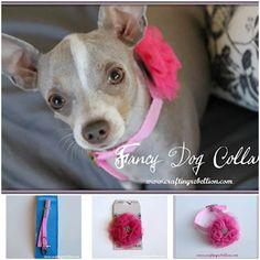 DIY Fancy Dog Collar
