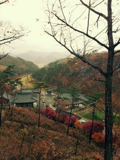 Raining Autumn in S.Korea