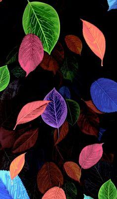 Wallpaper Floral Wallpaper Desktop, Flowery Wallpaper, Fall Wallpaper, Apple Wallpaper, Colorful Wallpaper, Paris Wallpaper, Mobile Wallpaper, Nature Wallpaper, Wallpaper Backgrounds