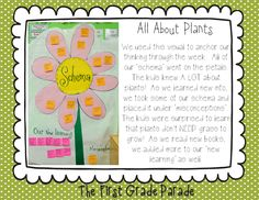 Plants Chart: Include schema, new learning, and misconceptions! Write on post it notes so you can move information around as you learn about plants! 1st Grade Science, Primary Science, Teaching First Grade, Science Classroom, Teaching Science, Student Teaching, Teaching Ideas, Classroom Ideas, Science Worksheets