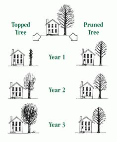 008-figure-pruning-comparison