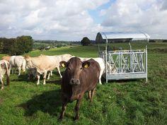 Koe in de wei voor haar Landbouwwinkel.nl hooiruif