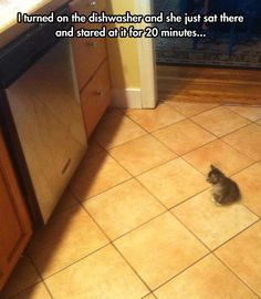 A kitty and a dishwasher