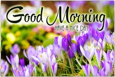 Good Morning Have A Nice Day Pic 1