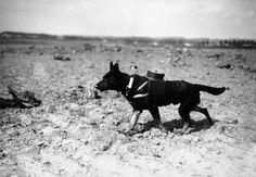 Controversial Topics: Aftermath of Men, Animal & Machines in WWI