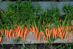 My Favorite Color, Herbs, Vegetables, Nature, Plants, Dyi, Gardening, Decoration, Ideas