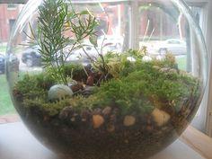 riparium fish bowl - Google Search