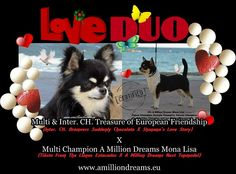 Love Duo Puppies will be born May 2015