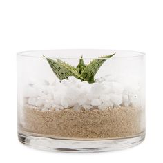 Succulent In Small Glass Potted Plants, Mothers, Succulents, Glass, Flowers, Food, Pot Plants, Drinkware, Corning Glass