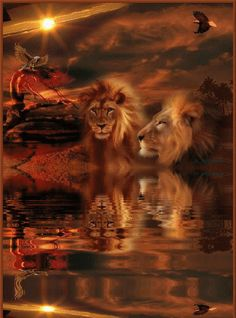 ƸLeoƷ The Mane Attraction Lion Pictures, Pictures To Paint, Beautiful Lion, Animals Beautiful, Big Cats, Cool Cats, Lion And Lamb, Gato Gif, Lion Love