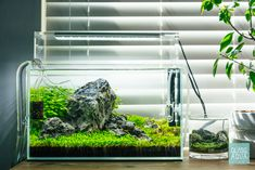 A new layout for our nightstand aquarium tank. Used a different aquatic foreground plant, background plant and changed up the layout. Nano Aquarium, Nature Aquarium, Planted Aquarium, Takashi Amano, Cool Fish Tanks, Plant Background, Fertilizer For Plants, Replant