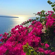 Love! @dashne83 I want to be here right now GREECE Beautiful Photos Of Nature, Nature Photos, Beautiful World, Beautiful Flowers, Beautiful Places, Beach Sunset Wallpaper, Belleza Natural, Flowers Nature, Beautiful Islands