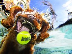 """""""Underwater Dogs"""" photos go viral and become a bookPictures - CBS News"""