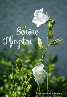 Schöne #Pfingsten wünscht wildpeppermint-design.de :-) // #Glockenblume