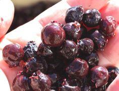 Saskatoon Berry Jam: The Traditional Recipe - Valerie Lugonja is . Saskatoon Recipes, Saskatoon Berry Recipe, Jelly Recipes, Jam Recipes, Cooking Recipes, Cooking Ideas, Jam Recipe With Pectin, Canadian Food, Summer Fruit